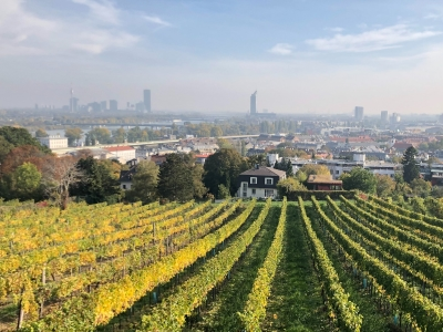 Wycieczka na wino do Austrii