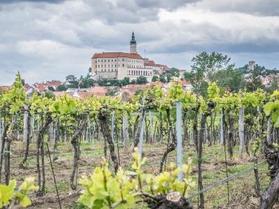 Wycieczka winiarska 2 dni Morawy