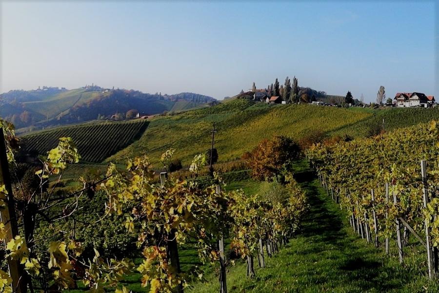 Styria wyjazd incentive wino LIPSA TRAVEL