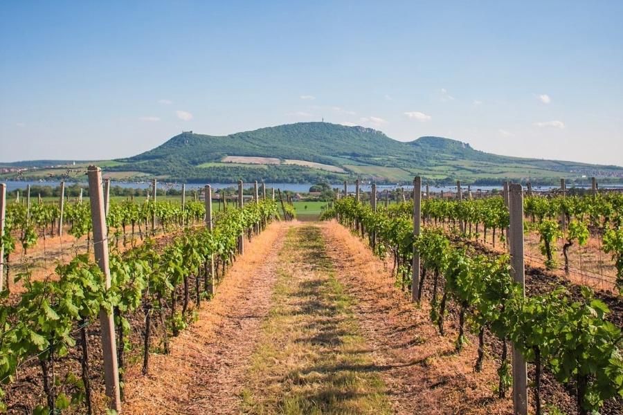 Wyjazd motywacyjny na Morawy winnice LIPSA TRAVEL