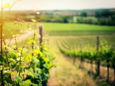 Wycieczka winiarska Zachodnia Słowacja