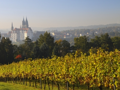 Wycieczka z degustacją win Saksonia