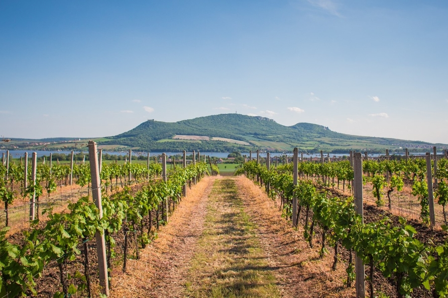 Wycieczki winiarskie - Morawy, Włochy, Austria