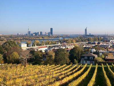 Wycieczka firmowa na wino, widok na winnice i Wiedeń