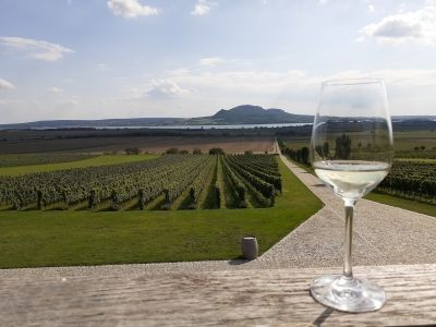 Wycieczka na wino do Czech widok z winnicy