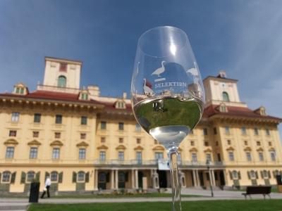 Wycieczka winiarska do Austrii pałac w Eisenstadt