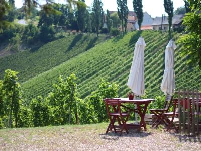 Wyjazd winiarski do Austrii, widok na winnicę w