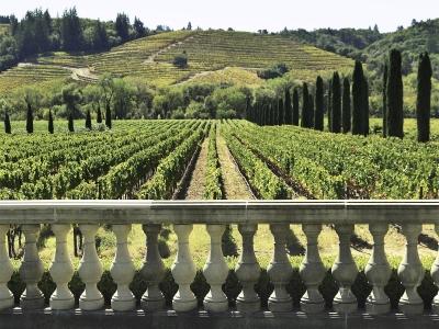Wycieczka winiarska do Północnych Włoch. Widok z tarasu na winnicę.
