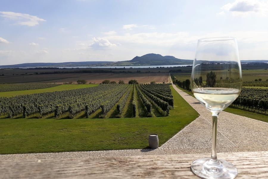 Wycieczki winiarskie widok z winnicy